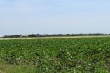 Stara Pazova Okolina 700,000€ Farmland Sale