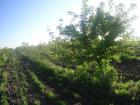 Beograd Okolina 39.000€ Poljoprivredno zemljište Prodaja