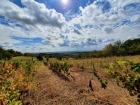 Vrdnik Okolina 154.500€ Poljoprivredno zemljište Prodaja