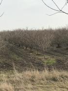 Pančevo Okolina 40.000€ Poljoprivredno zemljište Prodaja